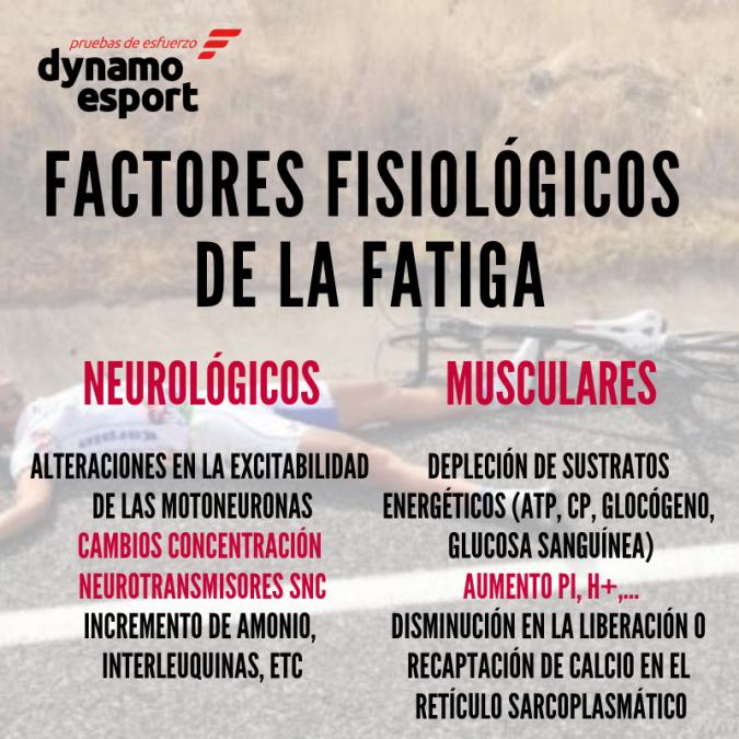 Factores fisiológicos de la fatiga